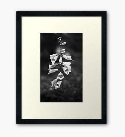 Foxglove (film) Framed Print