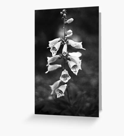 Foxglove (film) Greeting Card