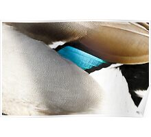 The warm plumage abstract of a duck Poster