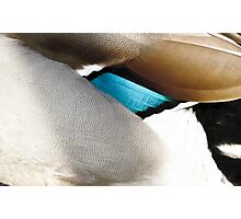 The warm plumage abstract of a duck Photographic Print