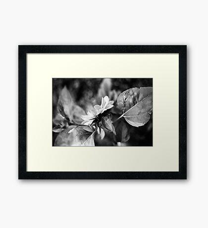 Sunflower (film) Framed Print