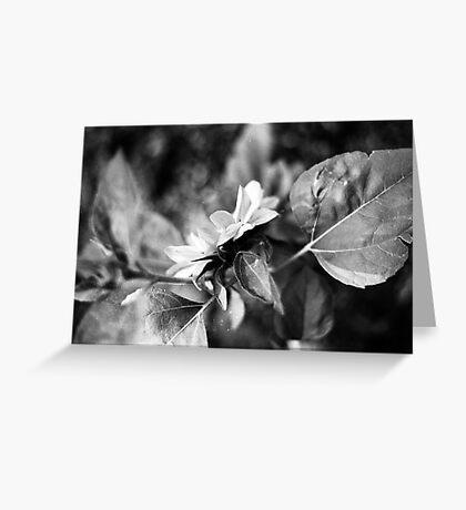Sunflower (film) Greeting Card