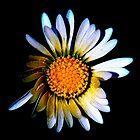Daisy. by Gervlove