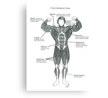 Muscle Diagram (Front View) Canvas Print