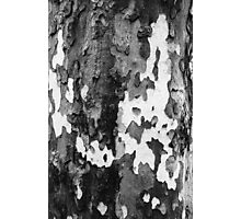 bark of a Platanus  Photographic Print