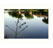 Lakeside Reflections Art Print