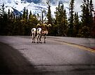 Stone Sheep Along the Alaska Highway by Yukondick