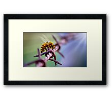 Barb Wire Bee Framed Print