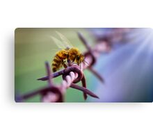 Barb Wire Bee Canvas Print
