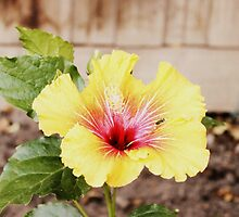 Tropical Backyard Flower by luccaphotograpy