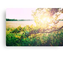 nature back light love Canvas Print