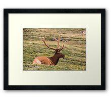 Majestic Elk Framed Print
