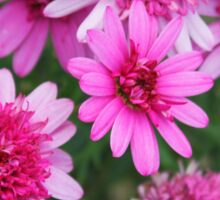 A profusion of pink Sticker