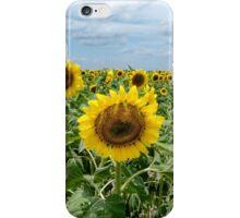 Midday Sunflower Field iPhone Case/Skin