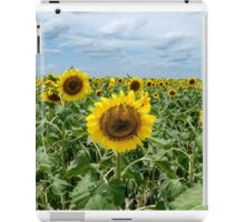 Midday Sunflower Field iPad Case/Skin