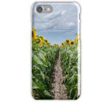 Sunflower Field Row iPhone Case/Skin