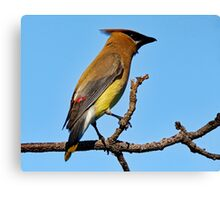 Cedar Waxwing on a Limb Canvas Print