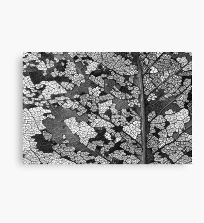 Monochrome leaf Canvas Print