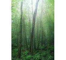 Sanctuary Photographic Print