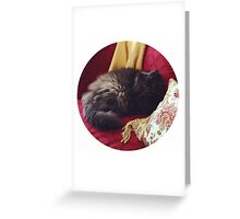 Fancy Cat, Fancy Couch Greeting Card