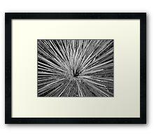DESSERT BURST Framed Print