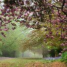 Spring Atmosphere on Queens - Mt Wilson by Bev Woodman