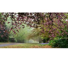 Spring Atmosphere on Queens - Mt Wilson Photographic Print