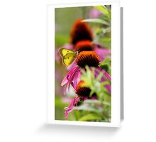 Pieridae with Coneflower Greeting Card