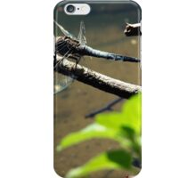 Polish dragonfly iPhone Case/Skin