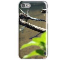 Polish dragonfly iPhone Case/Skin