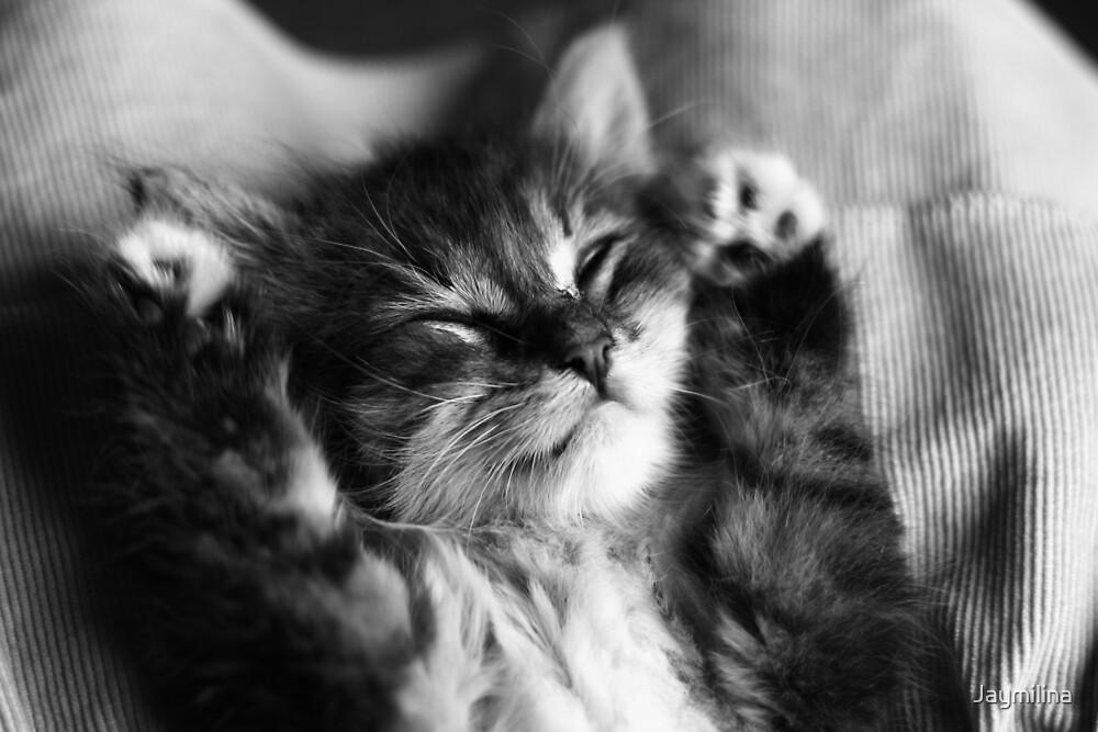 Kitten Sleep by Jaymilina