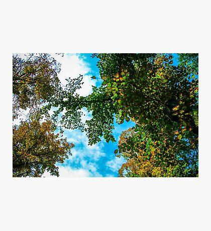 Leaves Photographic Print