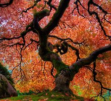 Japanese Maple Tree by davidgnsx1