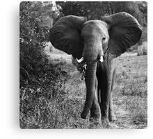 Animalia I - African Savannah Elephant Canvas Print