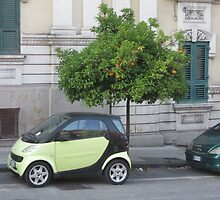 Smart Car under Orange Tree in Messina by Keith Richardson