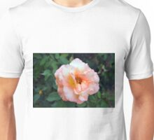 Beautiful delicate pink rose on green leaves background. Unisex T-Shirt