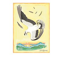 White-bellied Sea-eagle Photographic Print