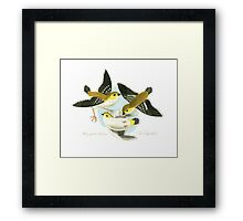 Forty-spotted Pardalote Framed Print