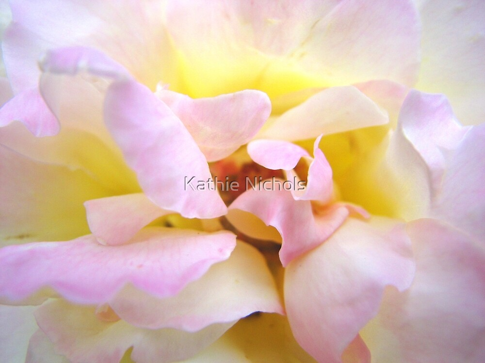 Breath of Rose by Kathie Nichols