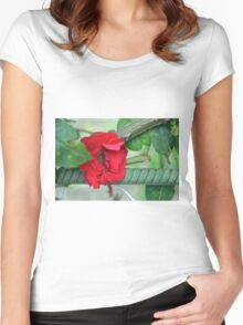 Red rose on natural background with green leaves. Women's Fitted Scoop T-Shirt