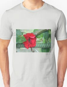 Red rose on natural background with green leaves. Unisex T-Shirt