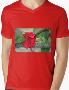 Red rose on natural background with green leaves. Mens V-Neck T-Shirt