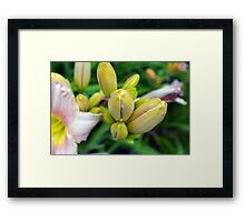 Flowers in the garden. Macro on yellow buds. Framed Print