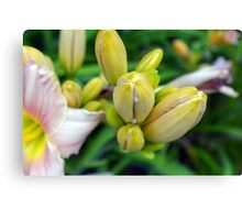 Flowers in the garden. Macro on yellow buds. Canvas Print
