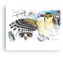 Southern Boobook Owl Canvas Print