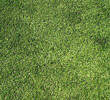 Green Lawn by Henrik Lehnerer