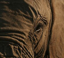 Elephant Face by Jo  McCarthy