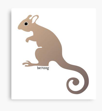 Bettong - Australian marsupial Canvas Print