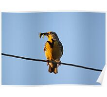 MeadowLark with Lunch Poster