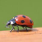 Ladybird by Declan Carr
